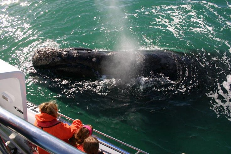 Whale watching near Hermanus, Overberg with Dyer Island Cruises. #dirtyboots #whalewatching #hermanus #southafrica