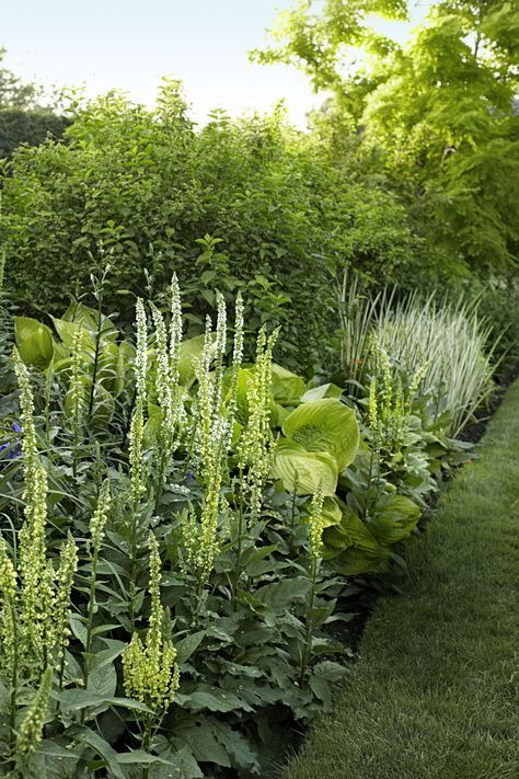 Simple colours but lots of textural contrasts- great planting.