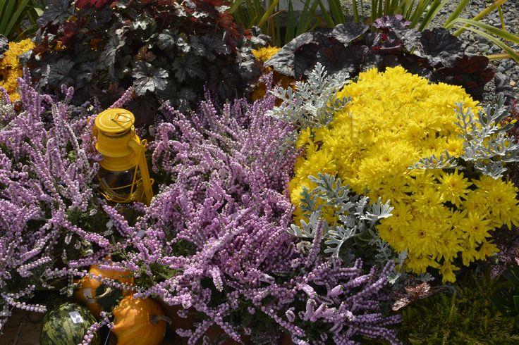 Bardzo jesienna kompozycja z chryzantemami