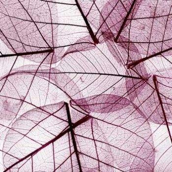 Vlies fotobehang paarse bladeren