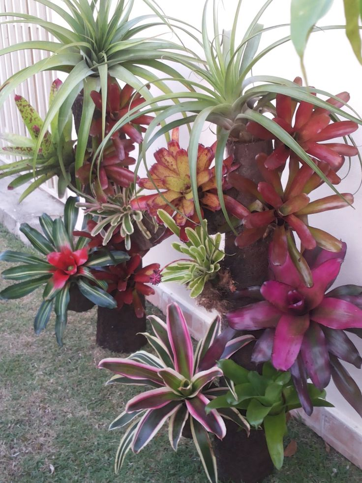17 best images about bromelaids on pinterest gardens for Paisajismo jardines