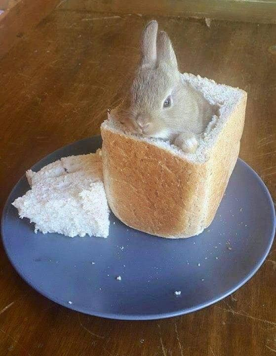 Bunny In Bread Rabbit Bunny Chow South Africa Funny