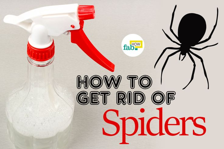 How to get rid of mice fast without poison with images