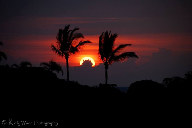 Kona Sunset Between The Palm Trees | Hawaii Pictures of the Day