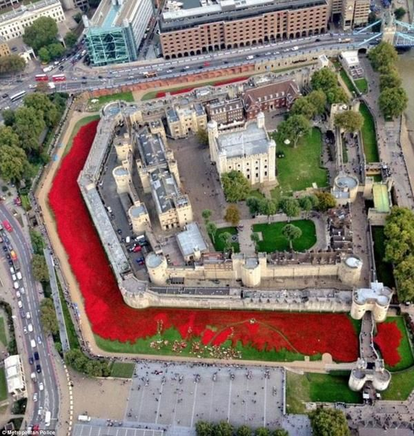 """Ceramic poppies at the Tower of London..... http://poppies.hrp.org.uk/about-the-installation ..... Installation """"Blood Swept Lands and Seas of Red"""", marking the centenary of the outbreak of the First World War. Created by ceramic artist Paul Cummins, with setting by stage designer Tom Piper, 888,246 ceramic poppies progressively fill the Tower's moat, each poppy representing a British fatality during the First World War."""