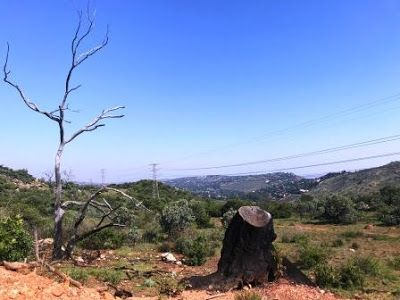 Hiking at Kloofendal Nature Reserve #Johannesburg #travel #journey #thingstodowithchildren #placestogo
