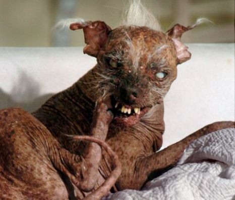 ugly cats - Google Search