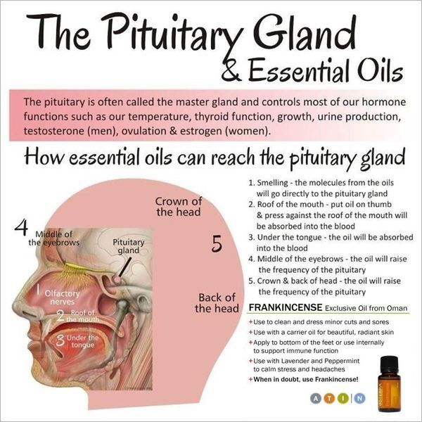 The pituitary gland system and essential oils