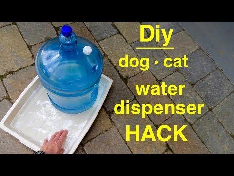 Best Dog Automatic Treat Dispenser