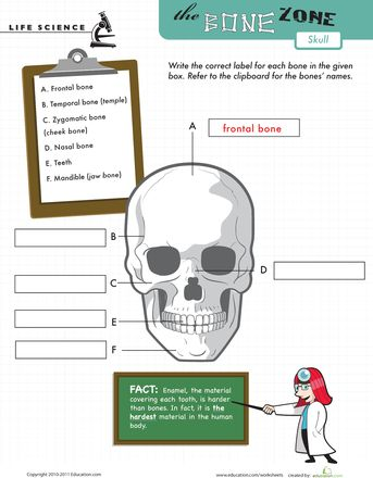17 best images about worksheets and quizzes on pinterest bones of the head human body and red. Black Bedroom Furniture Sets. Home Design Ideas