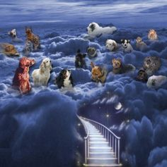 Waiting at the Rainbow Bridge.....this chokes me up every time I read the poem
