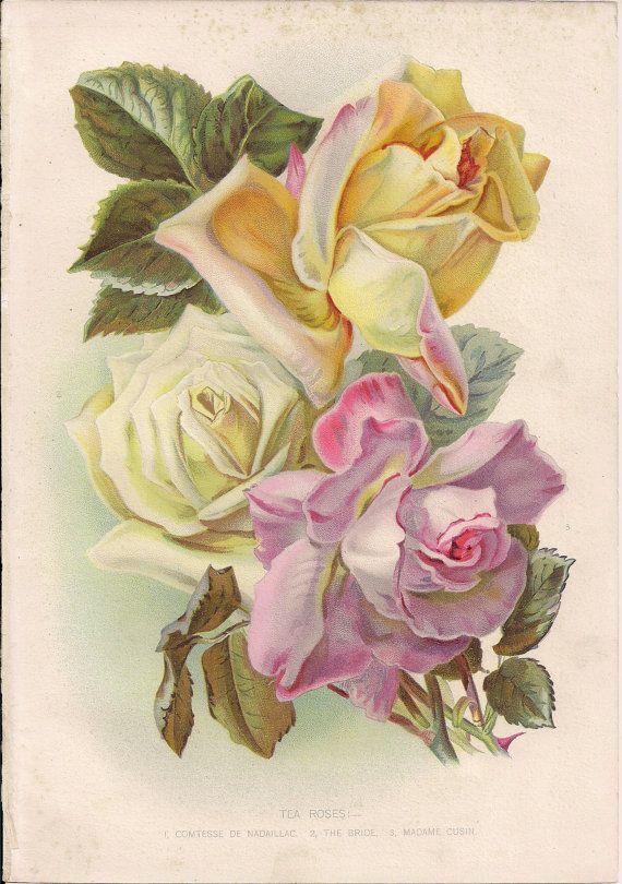 Original Victorian Chromolithograph Picture print c.1900 - Tea Roses - Shabby Chic.