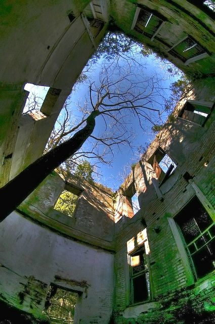 Tree through the open roof of an abandoned building.