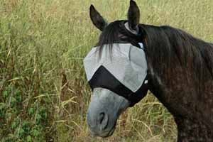 Cashel Crusader Fly Mask Warmblood by Cashel. $19.98. Offer your horse the ultimate in fly protection and a safe alternative to toxic and ineffective fly sprays. Rated #1 for comfort, design and fit by equine clinicians and publications, the Cashel(R) Crusader Fly Mask employs a patented three-hole cap design that ensures comfort, eliminates forelock damage and remains stationary whether your horse is in the stall or the pasture. The panels are constructed of soft-coated nylon m...