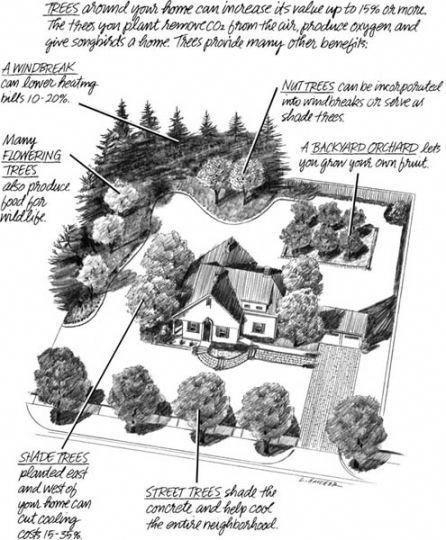Garden Design: Using Only Trees #