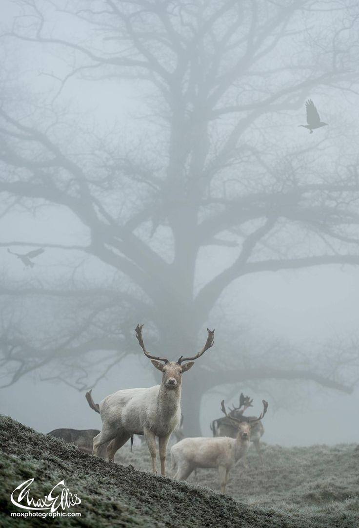 The Skeleton Tree - The wonder of mist
