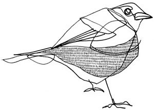 sparrow. line drawing.