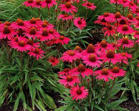 101 best images about garden on pinterest gardens for Low maintenance perennial flower bed
