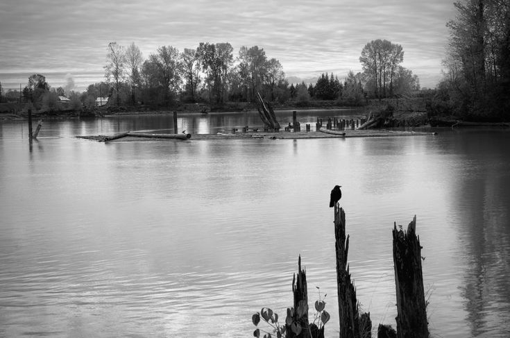 Autumn slips into winter by WWI ship ways at Poplar Island in the Fraser River. Click image to enlarge.
