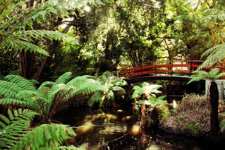A gorgeous bridge in the stunning Arderne Gardens - peace and tranquillity in the middle of a bustling area.