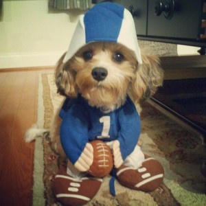 Adorable puppy wearing a football costume.   #dog #football #costume