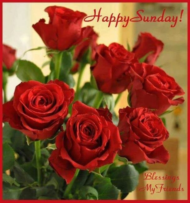 Here are 80 Sunday quotes and sayings that will help start your sunday in the best way possible. Each quote is inspiring and will bring your sunday many blessings.