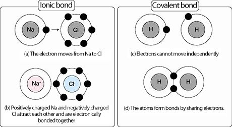 Ionic and Covalent bonding are depicted in the picture.  Ionic bonds - is the attraction of a cation to an anion and is a weak bond that can be broken up in the presence of something more attractive.  Covalent bonds - formed by the sharing of electrons between nuclei