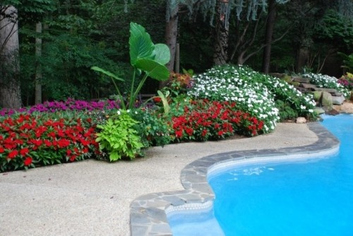 17 best images about landscaping my pool on pinterest for Gardens around pools