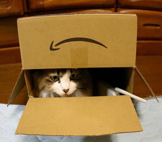 cat by Ichigoman, via Flickr