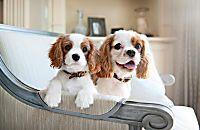 13 Friendliest Dog Breeds — Photo Gallery