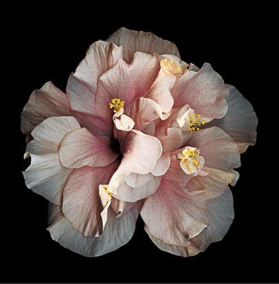 """""""A Glimpse at #Photo Vogue"""" alla #GalleriaSozzani di #Milano: in #mostra 101 scatti selezionati da #Vogue #Italia!"""