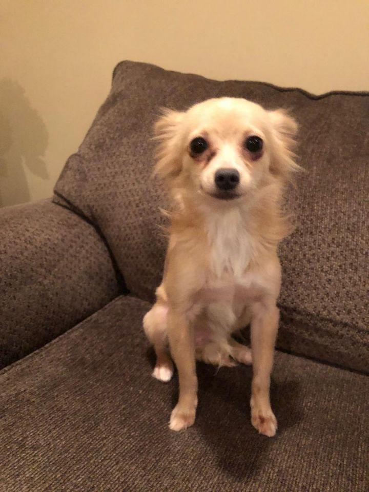 Adopt Chica On Petfinder Dog Adoption Help Homeless Pets Pet Adoption