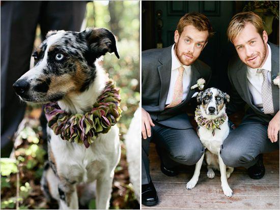 floral dog collar. # Weddings #Groom #Dog  http://www.weddingchicks.com/
