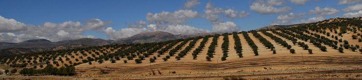 #Olivenholz im #Stil der #Provence #kaufen