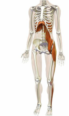 The Psoas – Our Body's Insurance Policy Against Pelvic Instability & The Case for Leaving it ALONE   Mobility Mastery