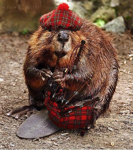 Celtic Lore Animal Series - The Beaver