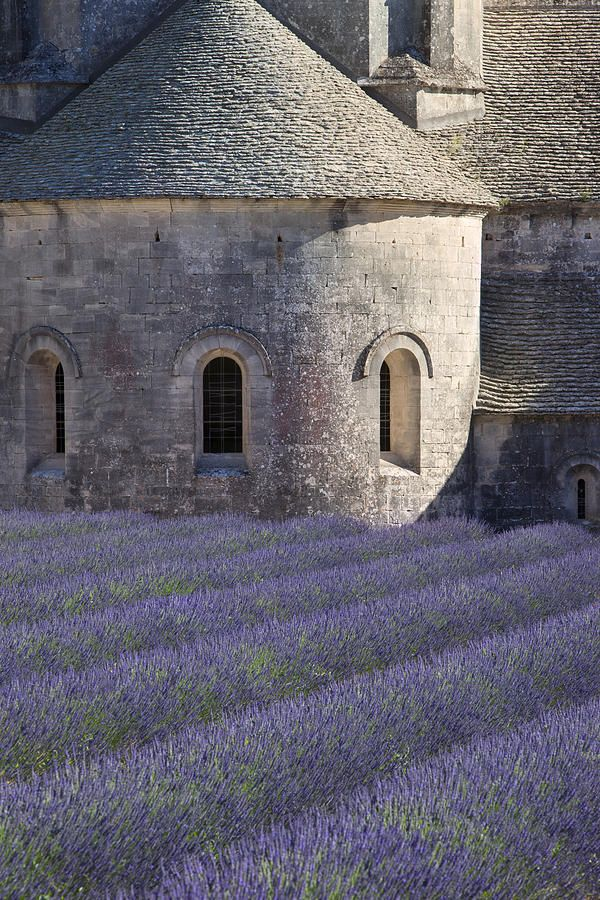greige and lavender...Abbaye de Senanque, near Gordes.