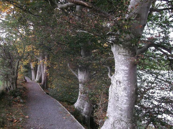 River Dee path (restored 2014 post surge damage Jan.)