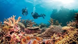 I've snorkelled on the Great Barrier Reef a few times now and it's magnificent!
