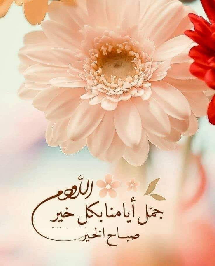 Pin By Merieme Chokairi On صباح الخير Good Morning Images Flowers Good Morning Beautiful Images Good Morning Greetings