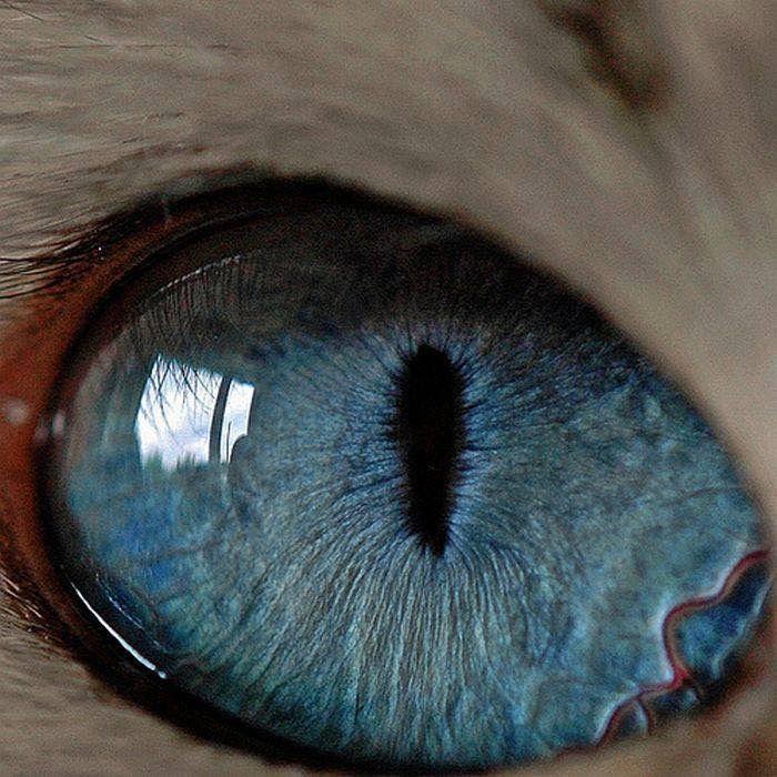картинка глаз человека и кота домашняя
