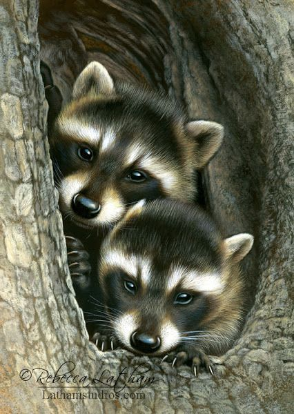 Baby Racoons are waiting for there mommy - by Rebecca Latham