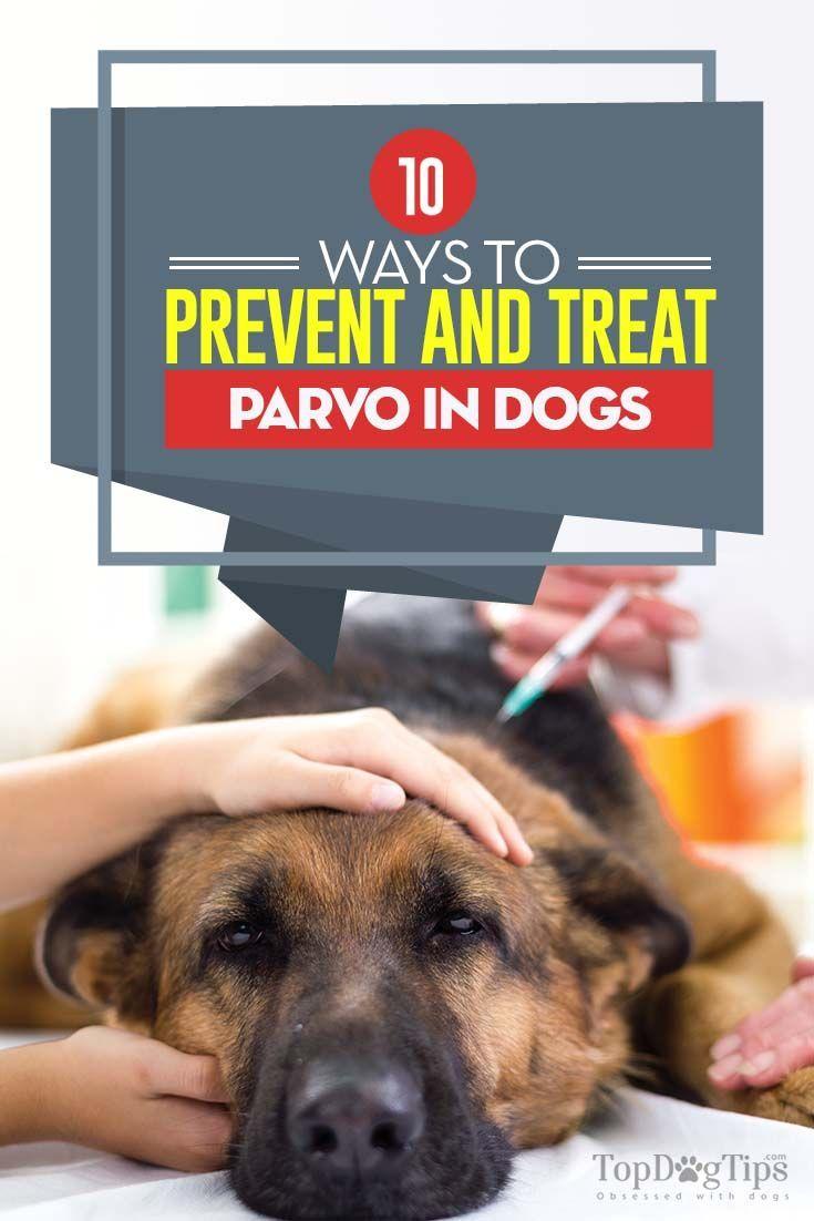 10 Ways To Prevent Parvo Based On Science Parvo Dog Treatment Dog Health Problems