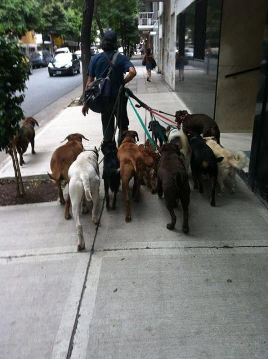 Professional dog walker in Chile, South America!