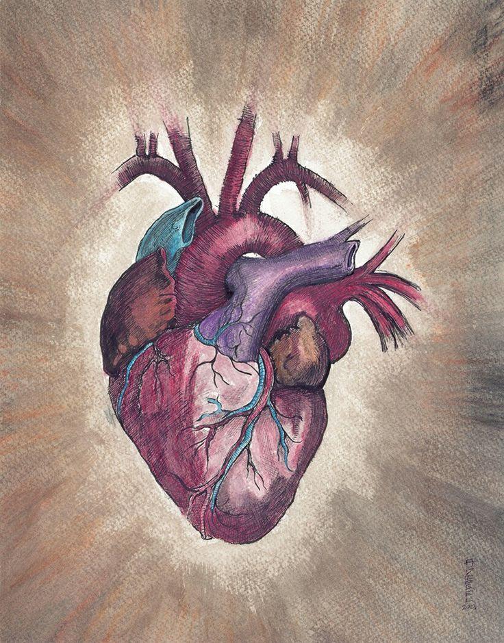 The human heart by SkarlettFury on DeviantArt   Human Heart Art