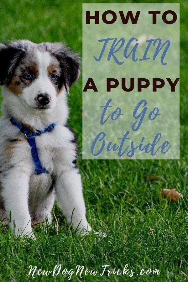 How To Potty Train A Puppy To Go Outside Dog Training Puppies