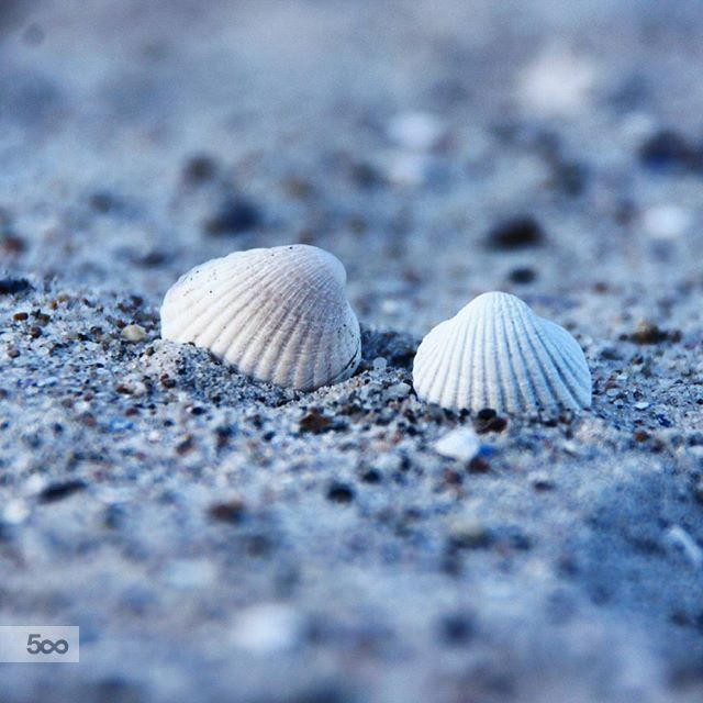 Seashells by Flemming Lauridsen on 500px