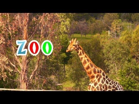 Zoo Animals Activity and Video! -Education to the Core