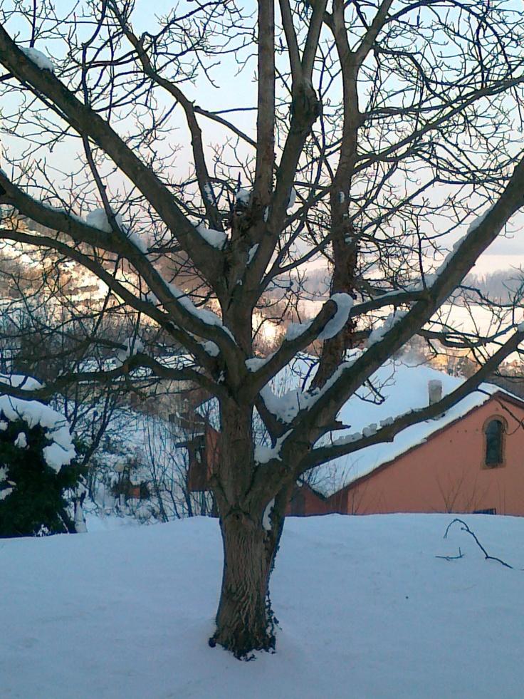 #tree #snow