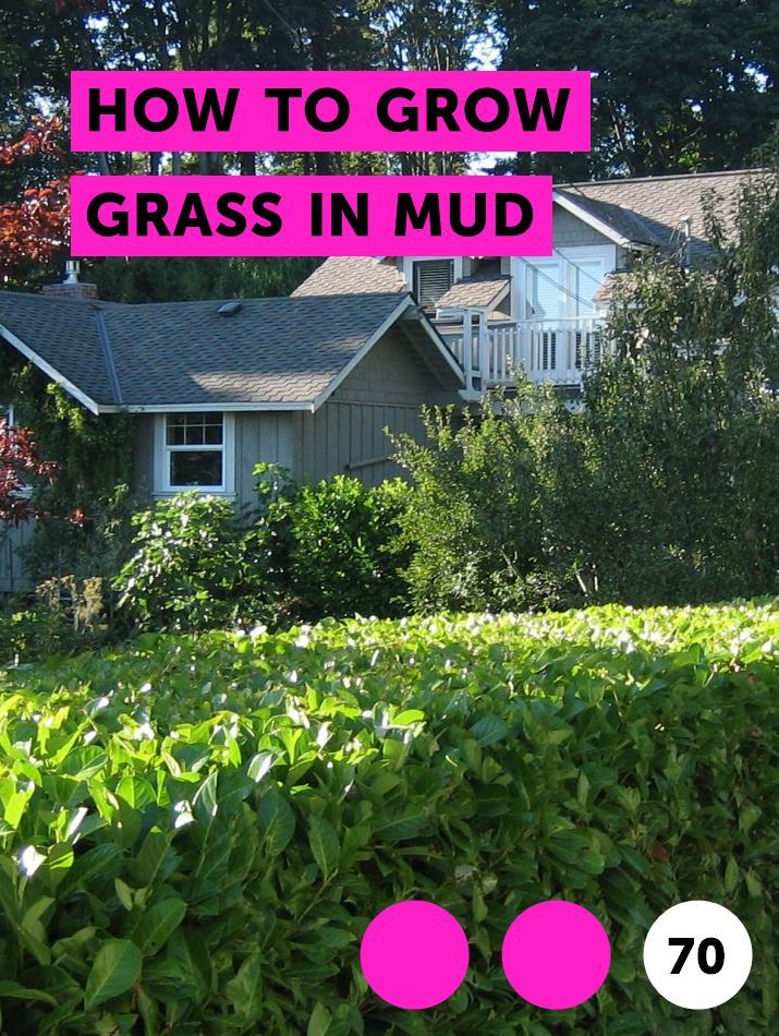 Learn How To Grow Grass In Mud How To Guides Tips And Tricks Centipede Grass Growing Grass Farm Pond